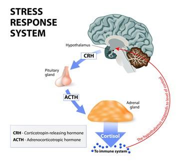 cortisoltest